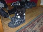 Kattunge på skoa mine :P