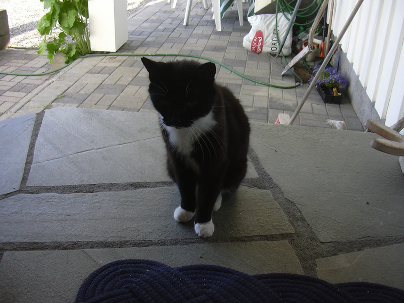 Prikken - min katt :P