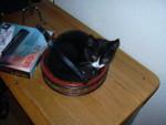 HVA er det med katter og kurver? :-)