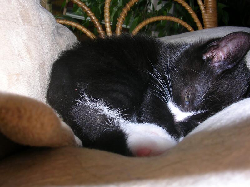 Must Sleep.... ZzZzZz