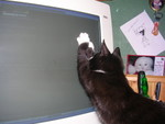 hunting the mouse-pointer is also something to do, heh.